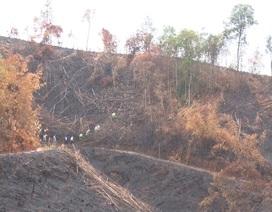 """Giao rừng làm """"địa bàn diễn tập phòng thủ"""", mất luôn... 175 ha"""
