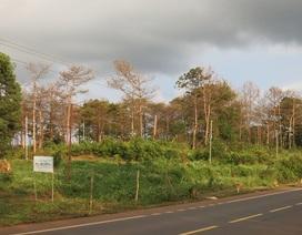 Hàng chục lãnh đạo huyện, xã cấp đất rừng sai quy định