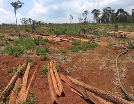 Kiến nghị điều tra vụ hơn 53 ha rừng bị phá trắng
