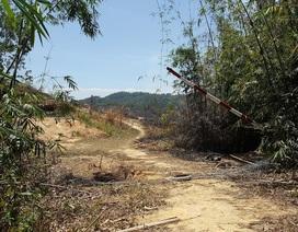Công an điều tra vụ hàng chục hecta rừng bị phá trắng