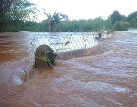 Băng suối để sửa đường dây điện, một người bị lũ cuốn mất tích