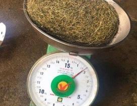 Phát hiện vật nghi là cát lợn quý hiếm nặng gần 2kg