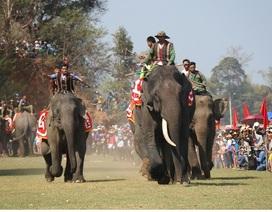 Tưng bừng lễ hội đua voi và thuyền độc mộc