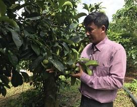 Bỏ thành phố lên núi trồng trái cây sạch kiếm tiền tỷ