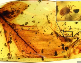 Công viên kỷ Jura ngoài đời thực: Phát hiện thấy một con bọ ve có máu khủng long