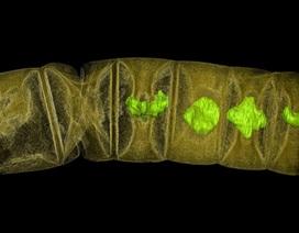 Hóa thạch làm lung lay giả thuyết về lịch sử sự sống trên Trái Đất