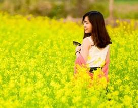 Sau cúc họa mi, giới trẻ Hà thành ngất ngây với hoa cải vàng rực rỡ