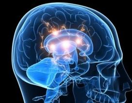 Mang người chết não trở lại cuộc sống