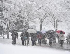 Chùm ảnh: Thí sinh Nhật Bản đội tuyết đi thi đại học