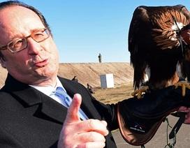 Không quân Pháp trình diễn khả năng bắt UAV bằng chim ưng