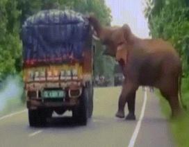 Voi khổng lồ chặn xe tải rồi làm điều gây bất ngờ