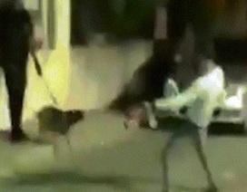 Nhảy nhót trêu ngươi chó nghiệp vụ, nhận hậu quả vào chỗ hiểm