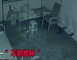 Tên trộm khổ nhục nhất quả đất: Biến đầu thành cuộn giấy toilet