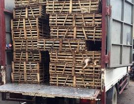 Phát hiện hàng tấn mèo không rõ nguồn gốc