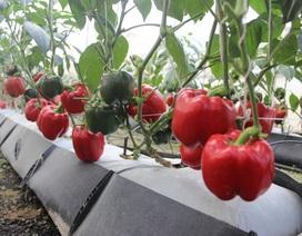 """Kiếm hàng trăm triệu đồng mỗi tháng từ """"công nghệ điện toán đám mây"""" trồng rau"""