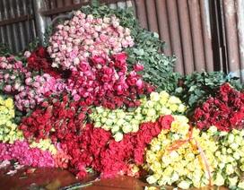 Cận lễ Tình nhân, hoa hồng Đà Lạt tăng giá gấp 3 lần