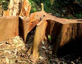 Quảng Nam yêu cầu điều tra, xử lý vụ phá rừng