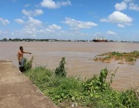 Sạt lở nghiêm trọng bờ sông Hậu, 2.000m2 đất trồng hoa bị cuốn phăng