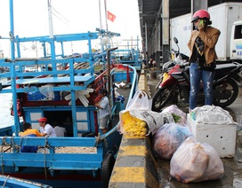 Ngư dân mang theo đầu heo, gà vịt, sẵn sàng đón Tết trên biển