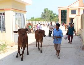 Long An: Masan Nutri-Science trao tặng 30 con bò giống cho người dân xã Lộc Giang