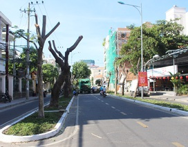 Di dời hàng loạt cây xanh, mở rộng đường Pasteur Nha Trang
