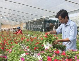 Lâm Đồng: Chàng trai 8x kiếm tiền tỉ từ những chậu hoa treo
