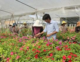 Đà Lạt sẽ có trung tâm giao dịch hoa