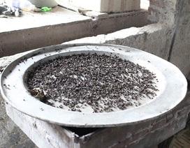 Hà Nội: Mỗi ngày bẫy được vài mâm ruồi (!)