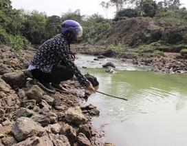 Hồ chứa 13 triệu m3 nước ô nhiễm: Phạt hai trang trại chăn nuôi