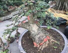 """Giá chát nghìn đô, đại gia tiếc hùi hụi vì để """"vuột"""" mất cây cần thăng"""