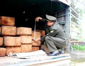 Bị phát hiện chở gỗ lậu, tài xế bỏ của chạy lấy người