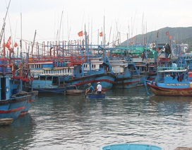 Ngư dân Nam Trung Bộ hối hả vươn khơi sau bão Damrey