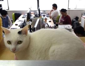 Đưa mèo đi làm - Giải pháp mới xả stress ở công sở Nhật Bản
