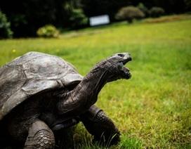 """Sinh vật già nhất thế giới - cụ rùa 186 tuổi - hóa ra... """"gay"""""""