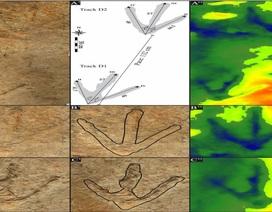 Tìm thấy dấu chân của một con khủng long to gấp bốn lần sư tử