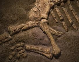 Bóng tối và giá lạnh đã giết chết khủng long như thế nào?
