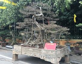 """Chiêm ngưỡng loạt cây cảnh tiền tỷ """"tụ hội"""" tại Hà Nội"""