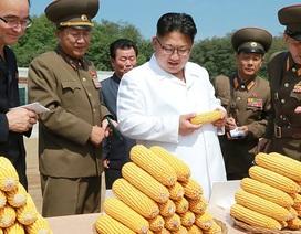 Ông Kim Jong-un: Kinh tế Triều Tiên vẫn tăng trưởng bất chấp lệnh trừng phạt