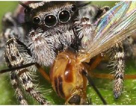 Phát hiện gây sốc: Loài nhện ăn nhiều hơn con người và cá voi