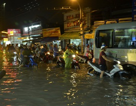 Bão chưa vào, Sài Gòn đã mưa ngập diện rộng, cây đổ la liệt