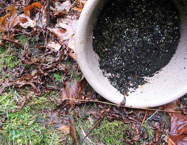 3 bước ngăn muỗi đến gần nhà bạn