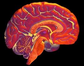 Não nhân tạo từ công nghệ in 3D mở ra hy vọng cho bệnh nhân Alzheimer