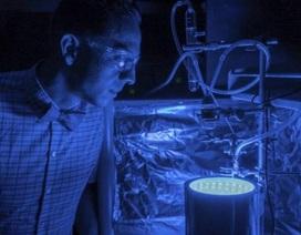 Quá trình quang hợp nhân tạo biến khí nhà kính thành không khí sạch
