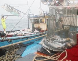 Khảo sát lại một lần nữa môi trường biển tại 4 tỉnh miền Trung