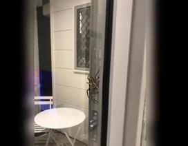 Cặp vợ chồng hoảng sợ khi thấy con nhện khổng lồ trước cửa nhà