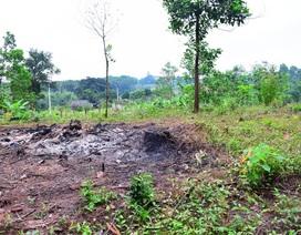 Nhiều cây thông lớn trong rừng đặc dụng bị bức tử