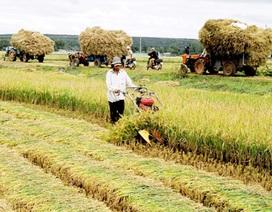 """Vì sao doanh nghiệp """"thờ ơ"""" với nông nghiệp, nông thôn?"""