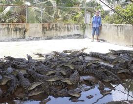 """Cá sấu bị người nuôi """"bỏ đói"""" vì... rớt giá!"""
