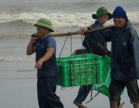 Cuộc sống nhộn nhịp nơi cửa biển