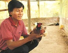 """Ông """"cử"""" nuôi chim trĩ làm giàu nơi xứ Quảng"""
